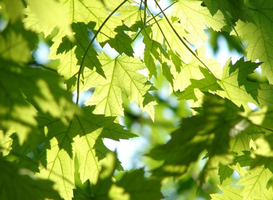 Leaves Photography
