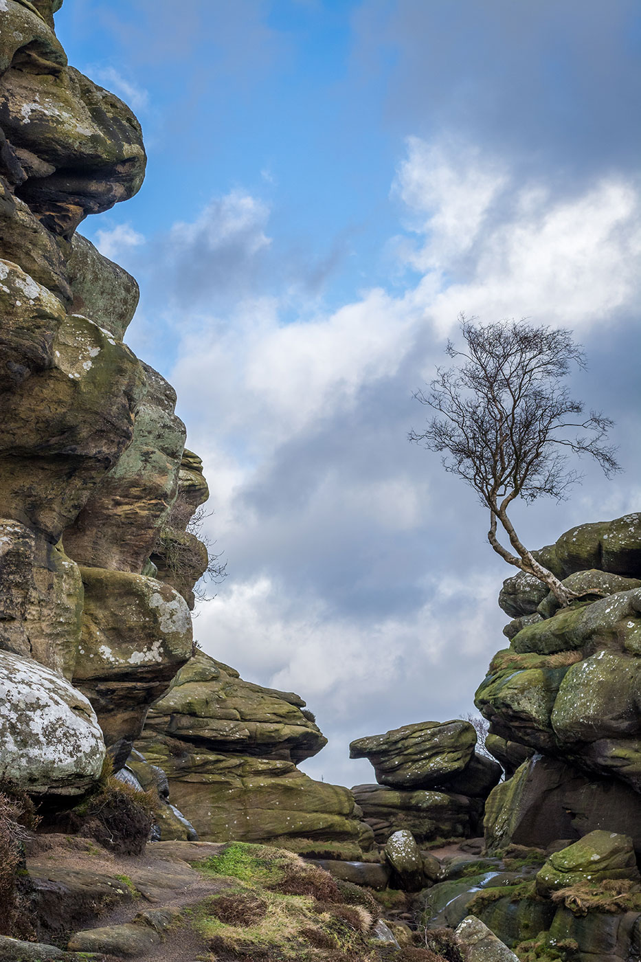Brimham Rocks Lone Tree