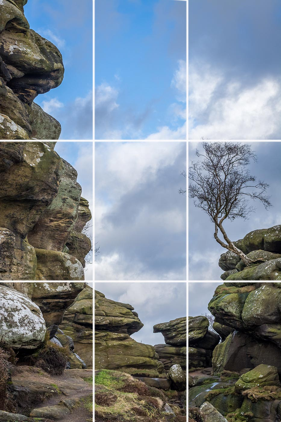 Brimham Rocks lone tree on rock outcrop in Yorkshire rule of thirds