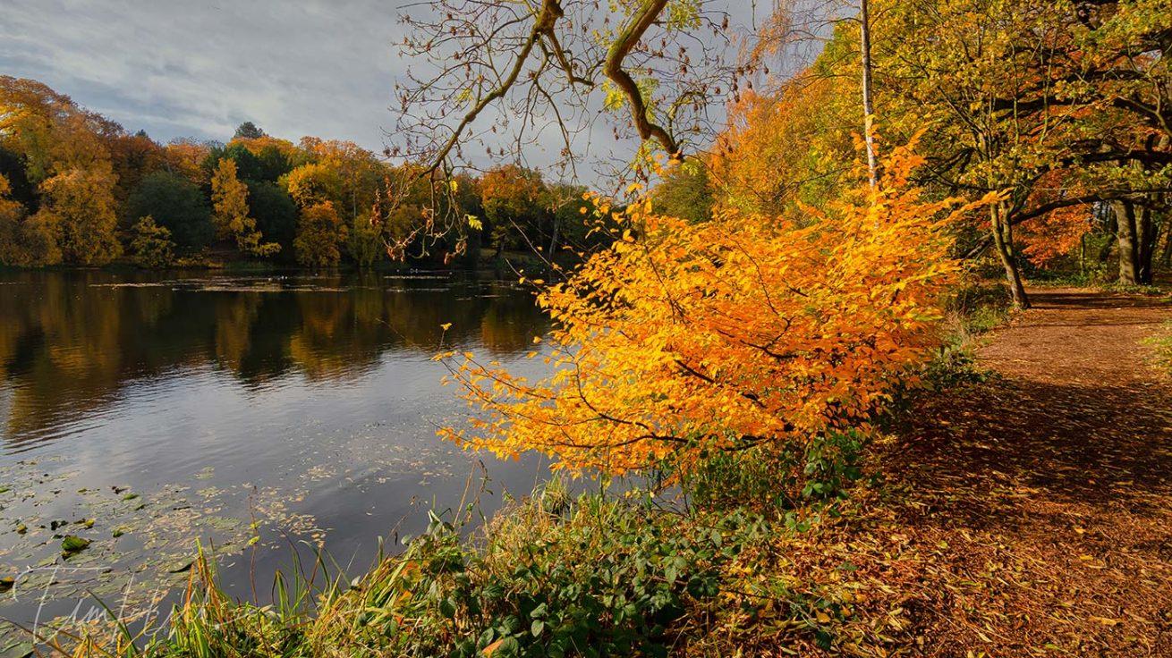 Autumn Walk in Yorkshire