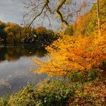 Autumn Photography in Yorkshire