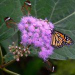 Butterfly Photography for Beginners