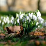 Nostell Priory Photography Walk February 2019