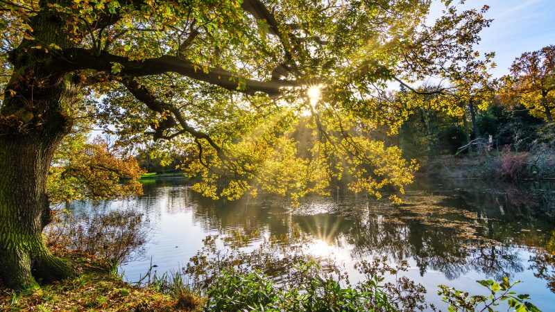 Autumn Sunshine on a Yorkshire Lake
