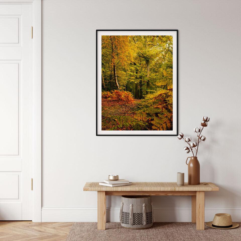 Newmillerdam Autumn Woods