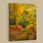 Newmillerdam Autumn Leaves