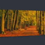 Newmillerdam Autumn Scene