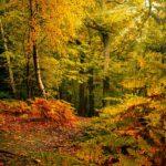 Newmillerdam Autumn Walk